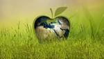 Обои Яблоко раскрашенное под глобус, лежит в зеленой траве