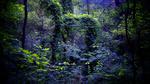 Обои Лес с зелеными и фиолетовыми листьями