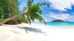 Обои Склонившаяся пальма на берегу моря, Тайланд / Thai