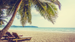 Обои Два лежака под пальмой у моря