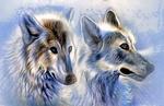 Обои Портрет двух волков на ледяном фоне