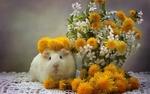 Обои Морская свинка в венке из одуванчиков сидит у вазы с весенними ветками вишни и желтыми одуванчиками