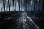 Обои Дорога в ночном лесу