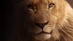 Обои Лев смотрит в камеру, by Christine Sponchia