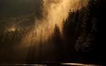 Обои Густой утренний туман окутывает лес
