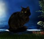 Обои Черный кот сидит на каменном парапете у моря