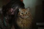 Обои Девушка со своей рыжей кошкой, by charmed quark