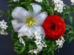 Обои Красная роза и белые цветы жасмина и лилии, by Lilo