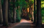 Обои Дорога в утреннем лесу, фотограф Giorgos Kossieris