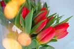 Обои Букет красных тюльпанов, by Gаbor Adonyi