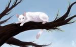 Обои Белая кошка на дереве, by mellinae