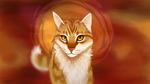 Обои Кошка рыжего цвета, by m0zarts