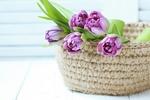 Обои Вязаная корзина с тюльпанами стоит на крашеных досках