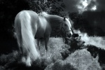 Обои Лошадь на пастбище, by Christine Sponchia