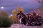 Обои Разноцветная кошка отдыхает вечером на каменной площадке, by Antonio Doumas