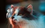 Обои Голубая бабочка сидит на носу кошки