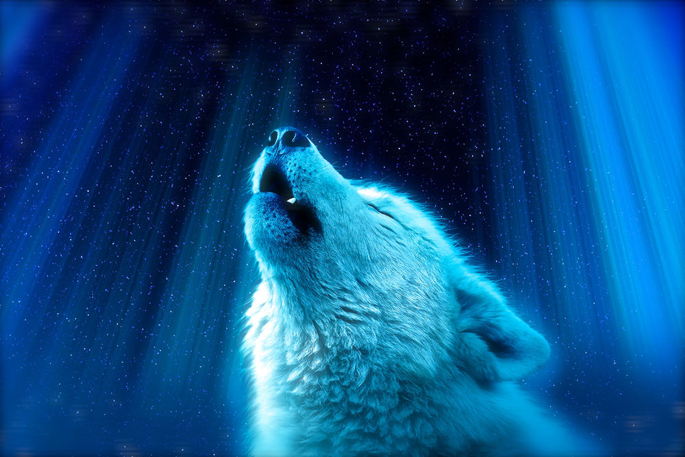 Обои для рабочего стола Волк на фоне неба, by IkyuValiantValentine
