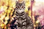 Обои Серая в полоску кошка на фоне боке