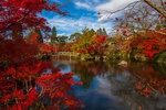 Обои Старый храм на берегу пруда в осеннем саду, Kyoto, Japan / Киото, Япония, by Adam Derewecki