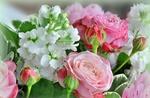 Обои Букет из белых левкоев и розовых роз