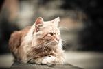 Обои Рыжий кот лежит на деревянной поверхности