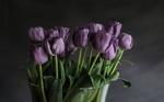 Обои Фиолетовые тюльпаны в вазе