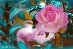 Обои Розовые розы, фотограф Крылова Татьяна