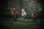 Обои Три лошади на поляне среди деревьев