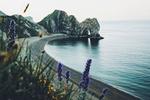 Обои Раннее утро на побережье, на переднем плане цветы, фотограф Даниэль Кассон
