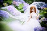 Обои Куколка в свадебном наряде среди цветов гортензии
