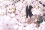 Обои Куколка среди веток цветущей сакуры