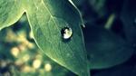 Обои Капля росы на листе