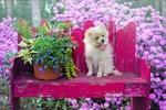 Обои Собачка сидит на лавочке рядом с цветами в горшке, by Jill Wellington