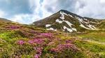 Обои Цветущие рододендроны с горой на заднем плане, by Zsolt Habarics