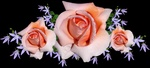 Обои Цветочная композиция с розовыми розами в центре, темный фон, by Beverly Buckley