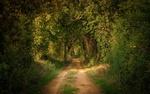 Обои Грунтовая дорога в лесу