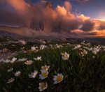 Обои Цветы анемоны перед горами в облаках