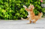 Обои Играющий рыжий котенок, by Mohammed J