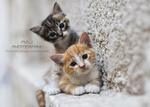 Обои Рыжий и серый котята у стены, by Mohammed J