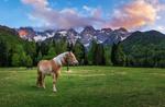 Обои Лошади на лугу на фоне гор Мартульек, Словения, фотограф Ales Krivec