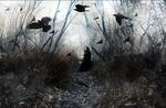 Обои Девушка в черной одежде сидит на тропинке между голых деревьев, над ней кружат вороны