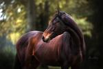 Обои Лошадь на фоне природы. Фотограф Mona Hоhler