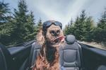 Обои Пес в очках сидит в авто, фотограф Petr Hricko