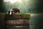 Обои Австралийская овчарка у озера. Фотограф Mona Hоhler