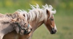 Обои Ослик рядом с лошадью