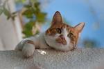 Обои Бело-рыжий кот на размытом фоне