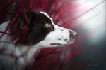 Обои Собака в профиль. Фотограф Mona Hоhler