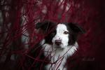 Обои Собака за ветками. Фотограф Mona Hоhler