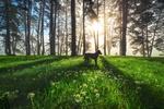 Обои Собака в утреннем лесу на зеленой поляне. Фотограф Валентин Валков