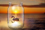Обои Лебедь в банке, висящей над поверхностью моря на закате солнца, фотошоп, фотограф Алексей Стовбер